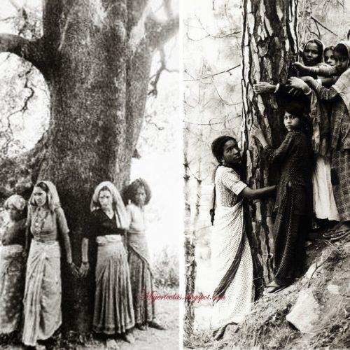 Ecofeminismo | Las Mujeres Chipkos, 40 años abrazando y salvando